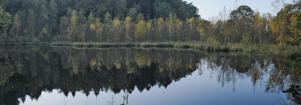 Wald als »grüne Apotheke«